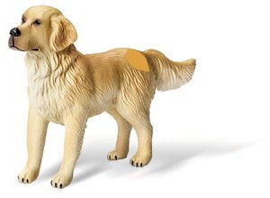 tiptoi® Tier-Set Golden Retriever