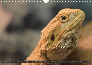Besondere Tierwelt (Wandkalender 2016 DIN A4 quer)