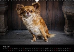 Chihuahuas - Cool & Cute / UK-Version (Wall Calendar 2015 DIN A3