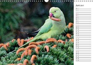 Heimische Gartenvögel