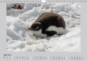 Antarctica Wildlife / UK-Version (Wall Calendar 2015 DIN A4 Land
