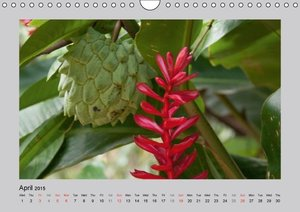Fascination Philippines (Wall Calendar 2015 DIN A4 Landscape)