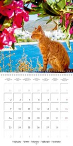Cats in Greece (Wall Calendar 2015 300 × 300 mm Square)