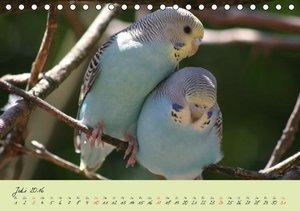 Wellensittiche - Gefiederte Freunde (Tischkalender 2016 DIN A5 q