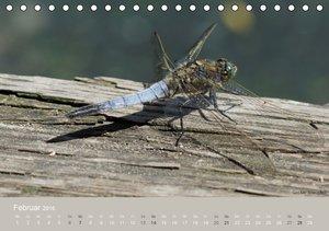 Faszinierende Insektenwelt (Tischkalender 2016 DIN A5 quer)