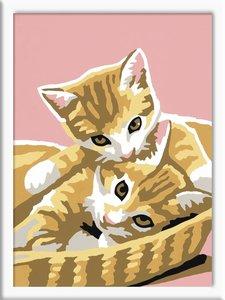 Katzenbabys. Malen nach Zahlen Serie F