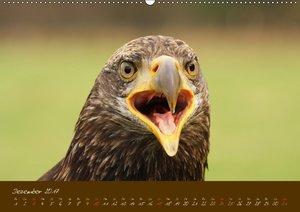 Greifvögel, Falkenartige und Eulen / CH-Version
