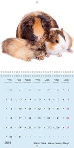 Sweet Animal Babies (Wall Calendar 2015 300 × 300 mm Square)