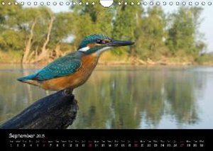 Birds & Landscapes / UK-Version (Wall Calendar 2015 DIN A4 Lands