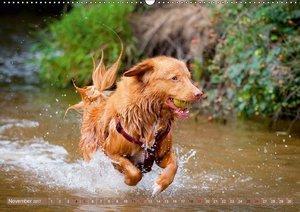 Rassehunde: Klasse Hunde