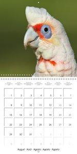 Australian Parrots & Cockatoos In Portrait (Wall Calendar 2016 3
