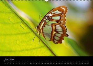Tropische Melodie - Schmetterlinge Vol.1