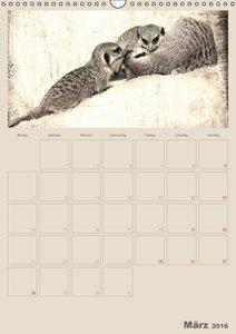 Lustige Erdmännchen (Wandkalender 2016 DIN A3 hoch)