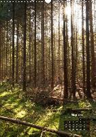 Backlighting in the forest (Wall Calendar 2015 DIN A3 Portrait) - zum Schließen ins Bild klicken