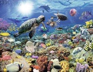 Leben im Korallenriff. Puzzle 2000 Teile