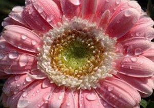 Blüten im Fokus - Blumen Impression (Posterbuch DIN A2 quer)