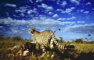 Serengeti BD
