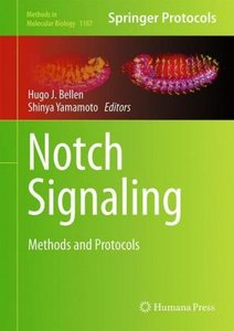 Notch Signaling