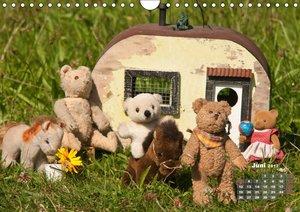 Geliebte Bären - Teddys