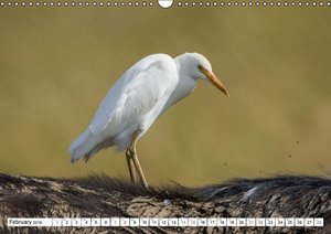 Emotional Moments: Birds of Africa UK-Version (Wall Calendar 201