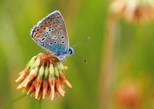 Kleine Promenade - Insektenwelt (Posterbuch DIN A3 quer)