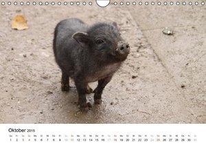 Lindert-Rottke, A: Schwein gehabt! (Wandkalender 2015 DIN A4