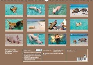 Schwimmende Schweine auf den Bahamas!