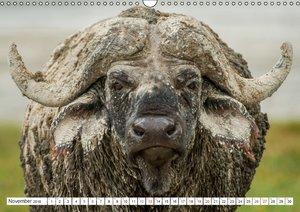 Emotionale Momente: Mein wildes Afrika (Wandkalender 2016 DIN A3