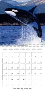 Dolphins & Whales (Wall Calendar 2015 300 × 300 mm Square)
