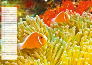 Fischparadies Riff (Wandkalender 2016 DIN A2 quer)