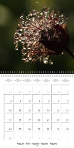 Little Wonders of Nature (Wall Calendar 2015 300 × 300 mm Square