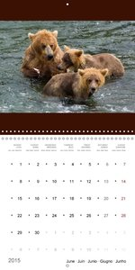 Brown Bears in the wild (Wall Calendar 2015 300 × 300 mm Square)