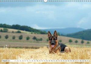 Deutscher Schäferhund Yack - Auf dem Weg zum Teenager (Wandkalen