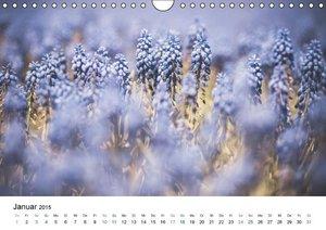 Dobrindt, J: Frühlingsfreuden - Ein ganzes Jahr (Wandkalende