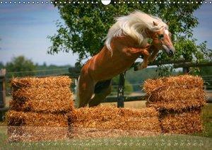 Haflinger-Pferde in Reinzucht (Wandkalender 2016 DIN A3 quer)