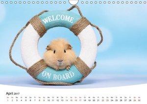 Niedliche Meerschweinchen (Wandkalender 2017 DIN A4 quer)