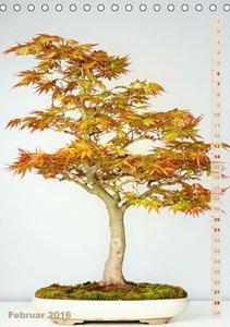 Bonsai - Zierliche Baumkunst (Tischkalender 2016 DIN A5 hoch)