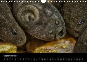 The Common Frog Collection (Wall Calendar 2015 DIN A4 Landscape)