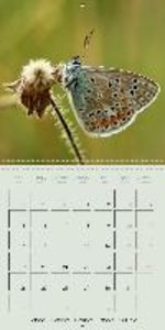 flying beauties (Wall Calendar 2015 300 × 300 mm Square)