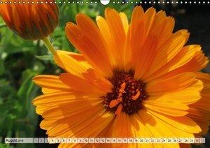 Happy Orange (Wall Calendar 2015 DIN A3 Landscape)
