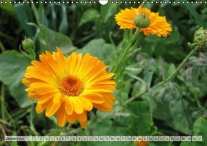 Happy Orange (Wall Calendar 2015 DIN A3 Landscape)
