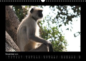 Monkey Faces Hanuman Langurs / UK-Version (Wall Calendar 2015 DI
