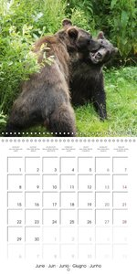 Bears funny moments (Wall Calendar 2015 300 × 300 mm Square)