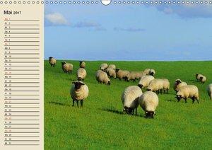 Schafe. Friedliche Rasentrimmer und Einschlafhilfen