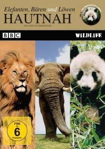 Hautnah: Elefanten,Bären und Löwen