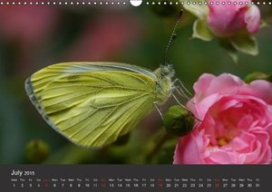Beings of Lightness Butterflies (Wall Calendar 2015 DIN A3 Lands