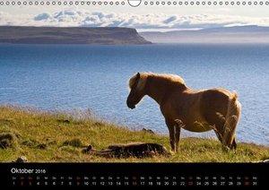 Islandpferde (Wandkalender 2016 DIN A3 quer)
