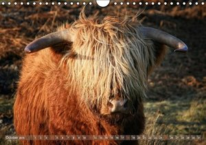 Highland Cattle - Native Breed of Scotland / UK-Version (Wall Ca