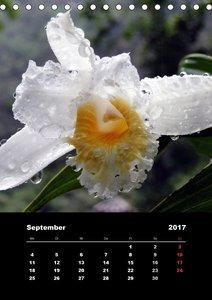 Tropische Blüten - einfach schön
