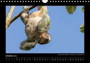 Bergwitz, U: Costa Rica tierisch gut 2015 (Wandkalender 2015